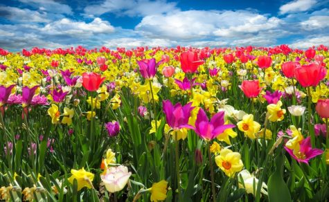 Plans for Spring