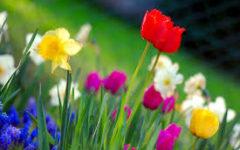 Springy Springin'